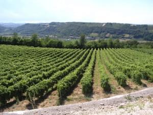 Winnica Gennari - wyjątkowe włoskie wina
